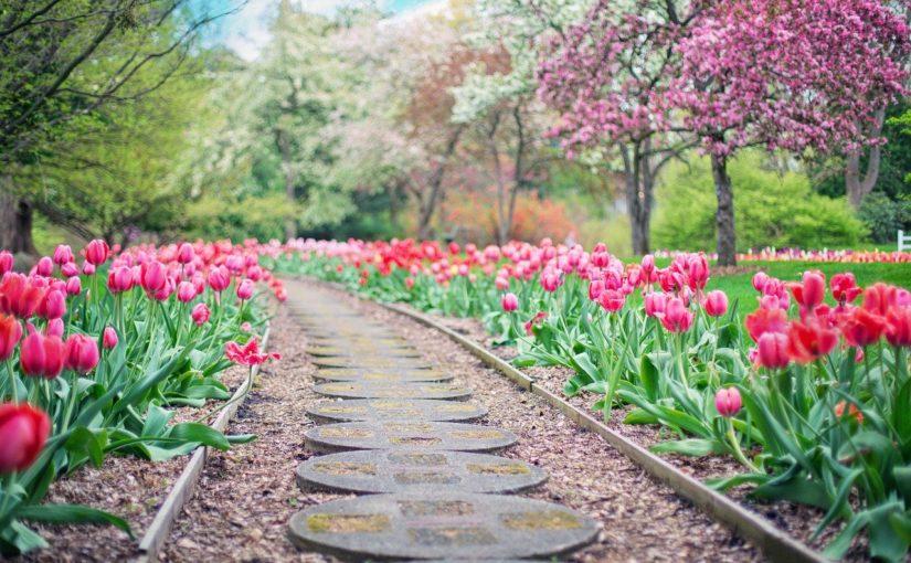 Ładny oraz uporządkowany ogród to zasługa wielu godzin spędzonych  w jego zaciszu w toku pielegnacji.
