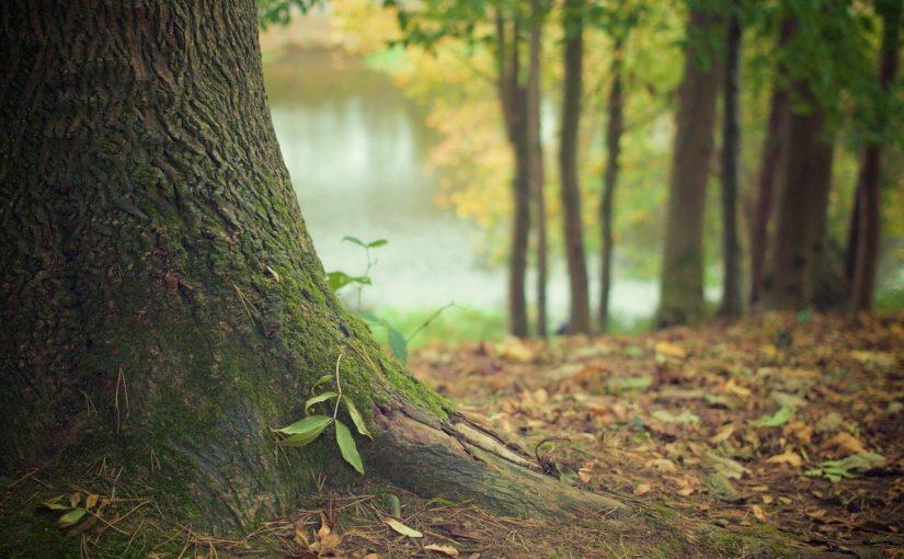 Prześliczny i {czysty zieleniec to nie lada wyzwanie, zwłaszcza jak jego pielęgnacją zajmujemy się sami.